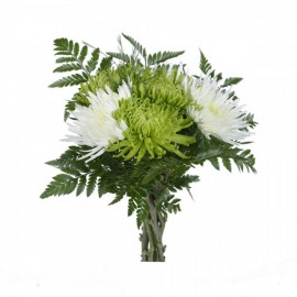 Madness chrysanthemum