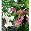 Florist's choice - Flowering Plants