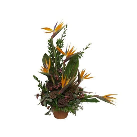 Tropical Tendence Arrangement